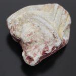 Cruziana sp. – Rastos de Trilobite