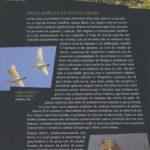 Avifauna em Viana do Castelo