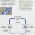 Estado de conservação e ameaças das espécies de peixes migradores – enguia