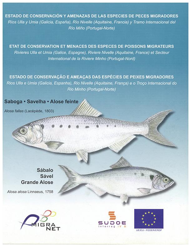 Estado de conservação e ameaças das espécies de peixes migradores – savelha/sável
