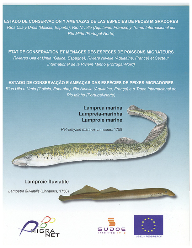 Estado de conservação e ameaças das espécies de peixes migradores – lampreia