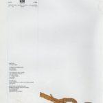 Roda do Leme, ano 7 – n.º53 (3ªsérie)