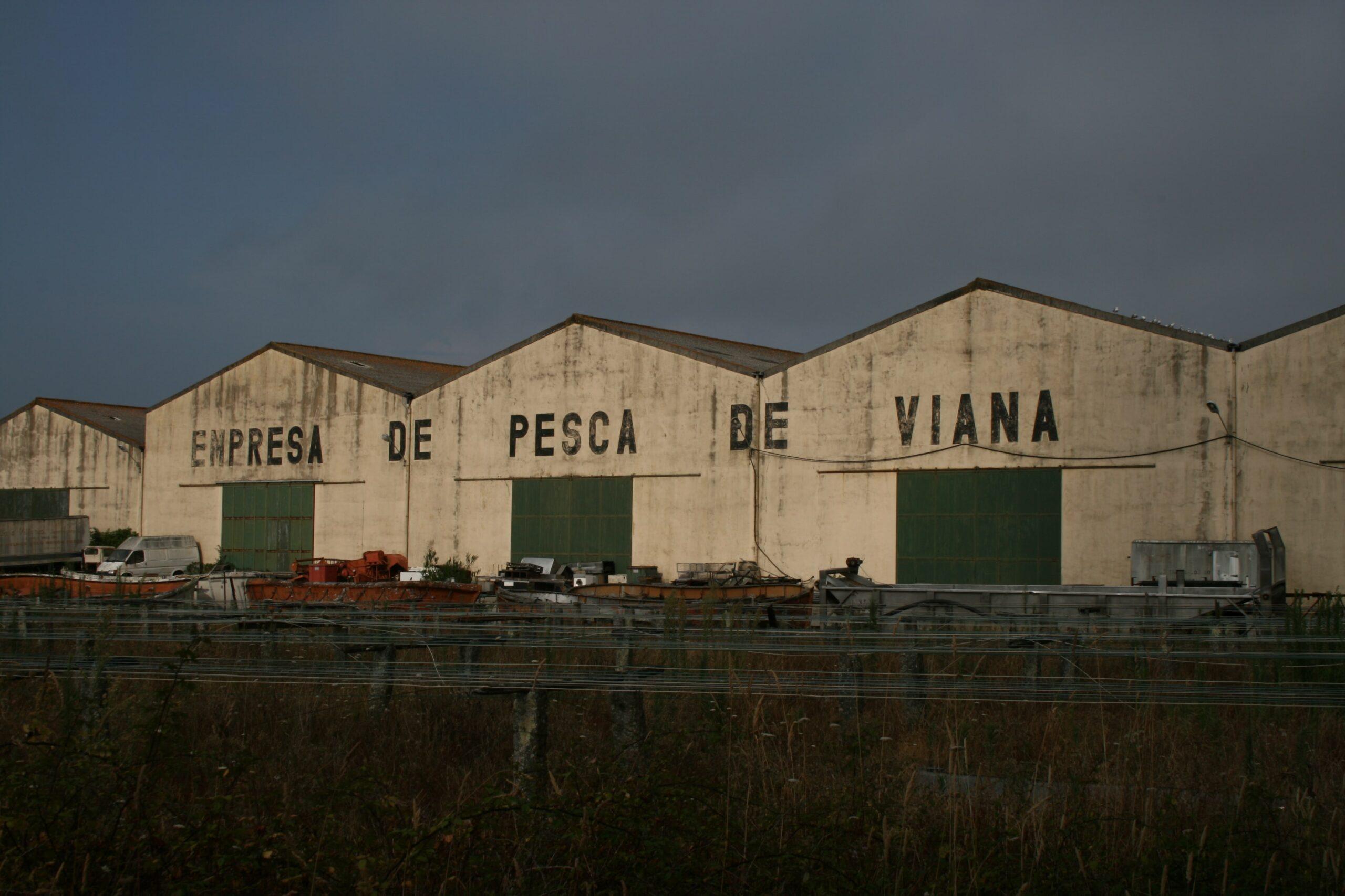 Empresa de pesca de Viana – Seca do bacalhau de Darque