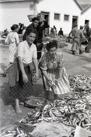 Venda de sardinha na Ribeira de Viana do Castelo