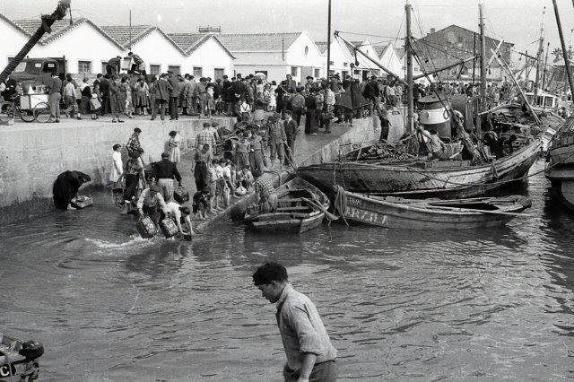 Descarga do peixe na ribeira de Viana